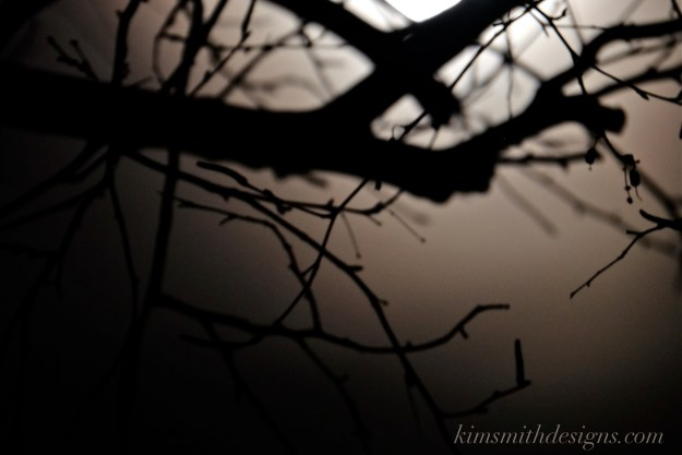 Snow Moon February Niles Pond Birch Tree kimsmithdesigns.com 2016. -3-