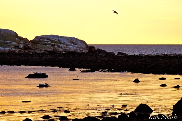 new-years-day-sunrise-eastern-point-gloucester-2017-brace-cove-21-copyright-kim-smith