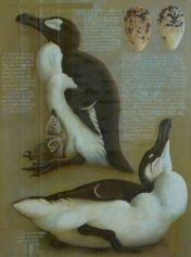 8b9ea267132be4b7cf528002d2383d30--great-auk-endangered-species