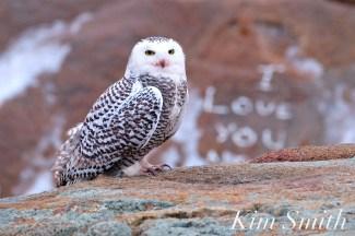 we-love-you-too-snowy-owl-small-copyright-kim-smith-14-02-111