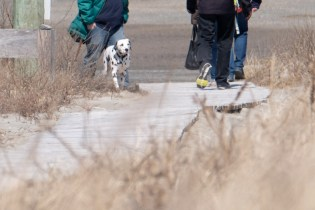 Dog Disturbance Good Harbor Beach Gloucester 4-6-19 c Kim Smith - 03