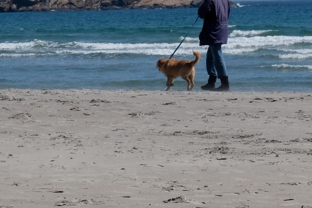 Dog Disturbance Good Harbor Beach Gloucester 4-6-19 c Kim Smith - 12