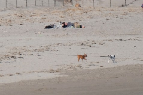 Dog Disturbance Good Harbor Beach Gloucester 4-6-19 c Kim Smith - 20
