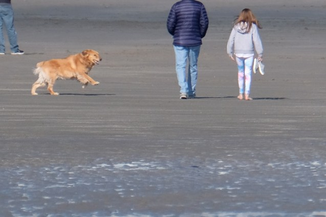Dog Disturbance Good Harbor Beach Gloucester 4-6-19 c Kim Smith - 24