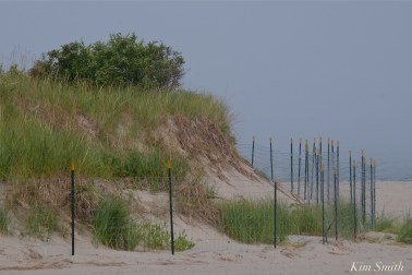 dune-fencing-good-harbor-beach-gloucester-2-copyright-kim-smith