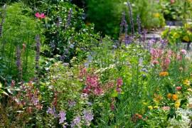 Urban Pollinator Garden Mary Prentiss Inn Cambridge copyright Kim Smith - 22