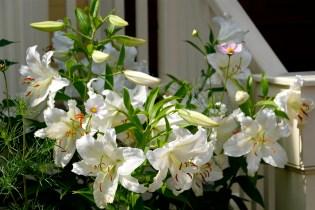 Urban Pollinator Garden Mary Prentiss Inn Cambridge copyright Kim Smith - 45