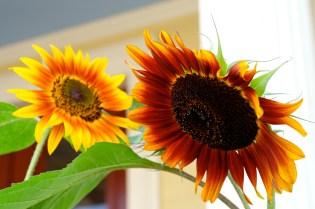 Urban Pollinator Garden Mary Prentiss Inn Cambridge copyright Kim Smith - 61