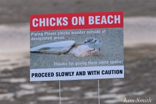 Piping Plover Signs copyright Kim Smith - 12 jpg