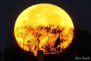 Blue Moon Halloween October 31, 2020 Gloucester copyright Kim Smith - 2 of 8