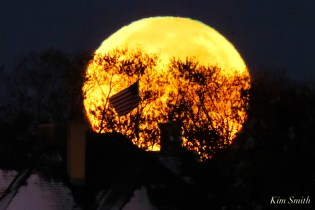 Blue Moon Halloween October 31, 2020 Gloucester copyright Kim Smith - 4 of 8