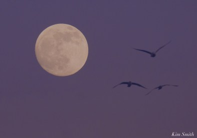 December Full Wolf Moon Brace Cove Gloucester Essex County copyright Kim Smith - 1 of 23