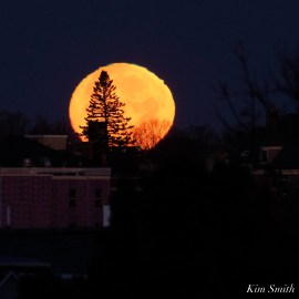 December Full Wolf Moon Gloucester Essex County copyright Kim Smith - 13 of 23