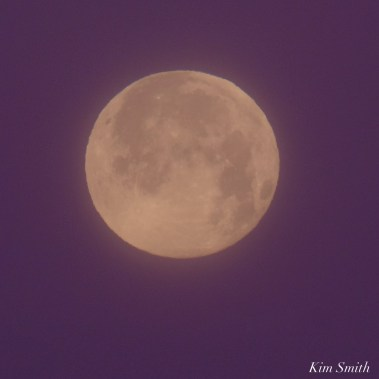 December Full Wolf Moon Gloucester Essex County copyright Kim Smith - 20 of 23