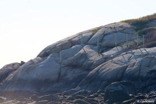 #savesaltisland Salt Island Gloucester MA copyright Kim Smith - 6 of 14