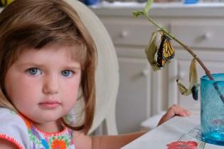 Monarchs emerging and Charlotte copyyright Kim Smith - 1 of 13