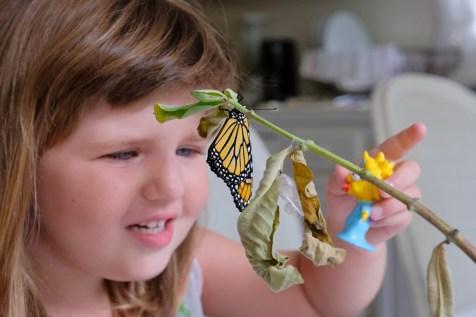Monarchs emerging and Charlotte copyyright Kim Smith - 11 of 13