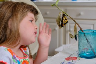 Monarchs emerging and Charlotte copyyright Kim Smith - 2 of 13