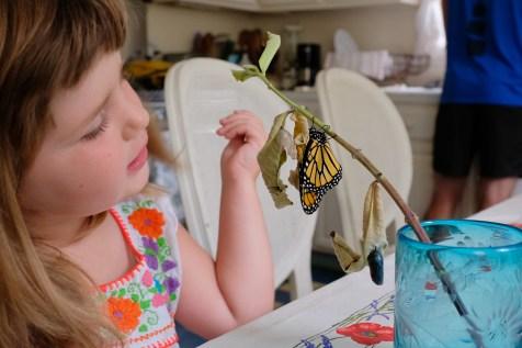 Monarchs emerging and Charlotte copyyright Kim Smith - 8 of 13