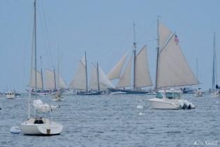 Schooner Parade of Sail Gloucester 2021 copyright kim Smith - 52 of 52