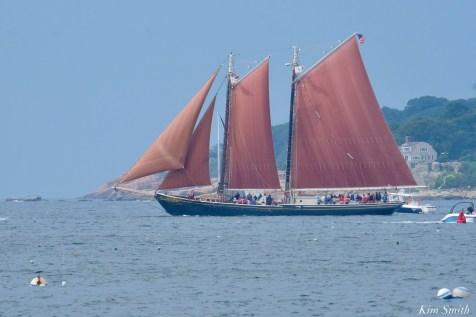 Schooner Parade of Sail Roseway Gloucester 2021 copyright kim Smith - 36 of 52