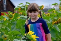 School Street Sunflowers Ipswich Essex County copyright Kim Smith - 6 of 11