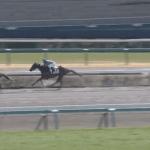 木村牧場生産育成馬アロハブリーズ、1番人気に応えて中山で勝ち上がり!