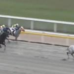 木村牧場育成馬エピックアン、得意コースで3勝目を挙げる!
