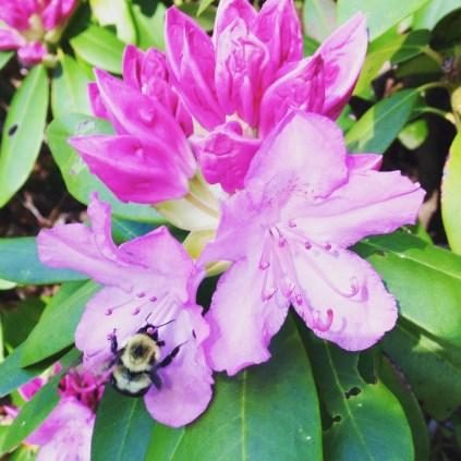 Worker bee