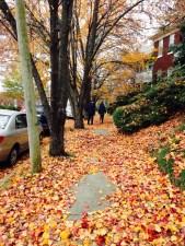 Favorite Sidewalk
