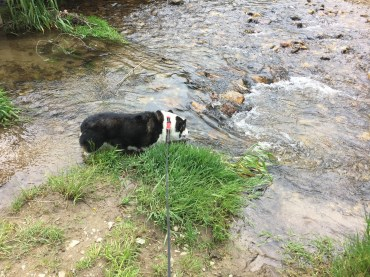 My dog, Higgins, loves this creek.