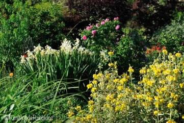 Spring's Oriental iris and phlomis make delightful bed mates.