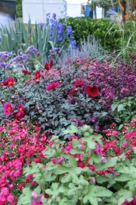 Splashes of deep pinks and cool reds reinforced the profusion of Big Red pelargoniums either side of the reflection pool.