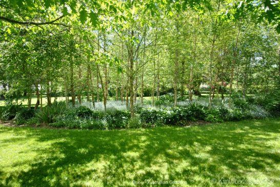 Birchgrove walk in spring
