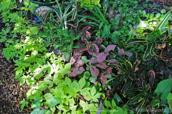 Ground covers have been choreographed in colourful, texture drifts.