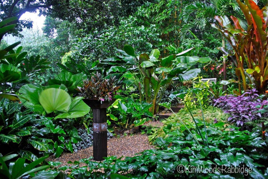 Tropical north queensland garden tour our australian gardens for Garden design queensland