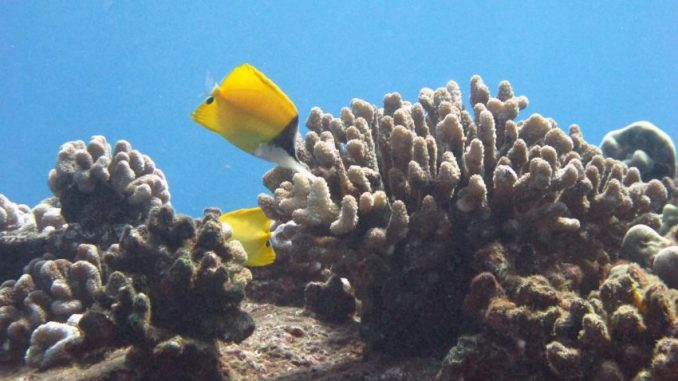 ace0a hawaii mercanlara zarar verdic49fi dc3bcc59fc3bcnc3bclen kimyasallarc4b1 c4b0c3a7eren gc3bcnec59f koruyucularc4b1nc4b1 yasakladc4b1 e1534966096168