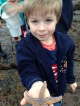 Tadpole with a star fish, caught in one of the rock pools
