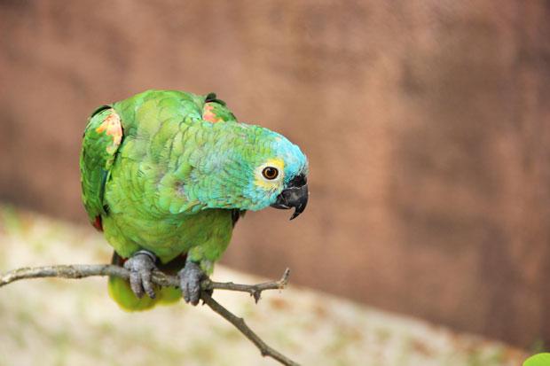 zoo-labenne-perruche