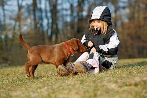 Kind und Welpe, Familienhunde