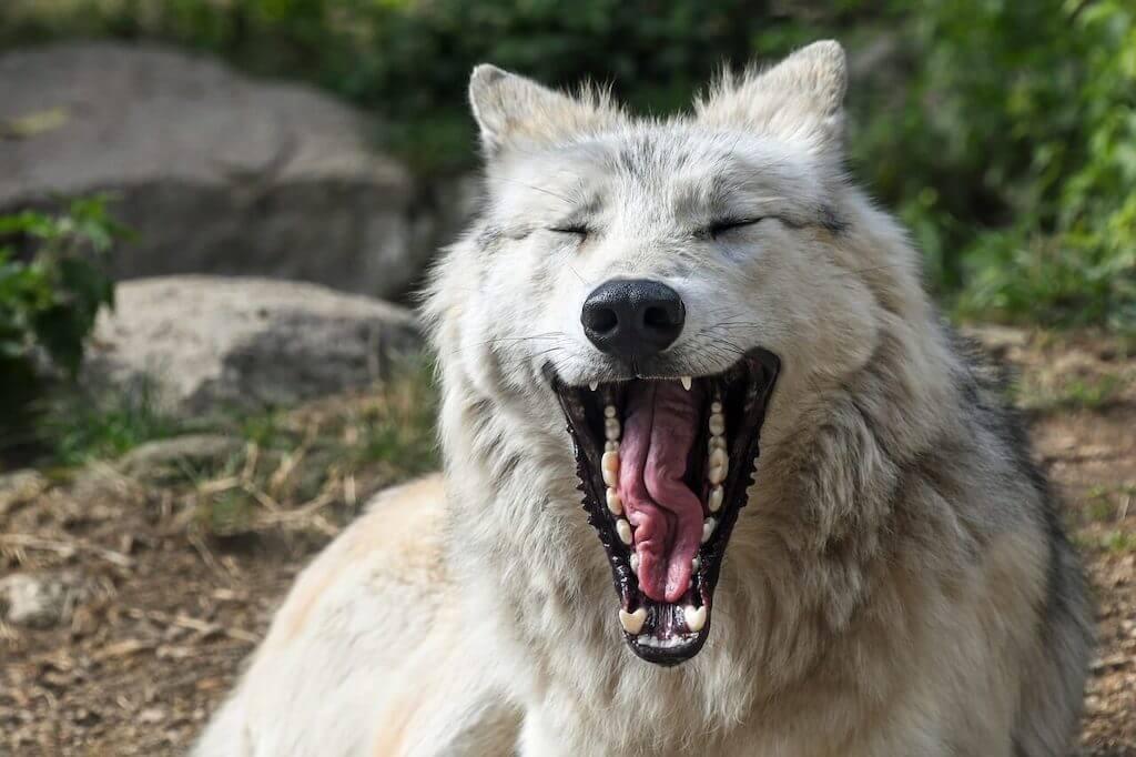 Die schönsten Wolfsbücher für Kinder