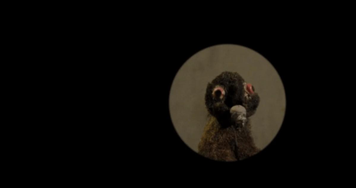 Kurzfilme vom ITFS 2013: Tauben!