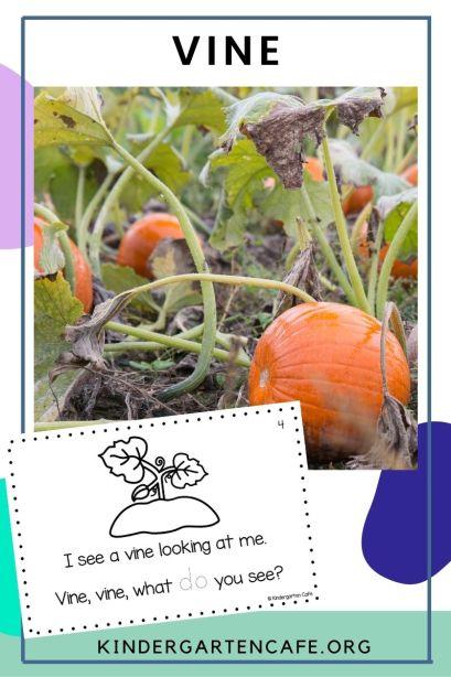 life cycle of pumpkin: vine