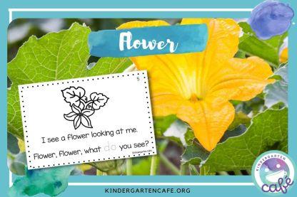 life cycle of pumpkin: flower
