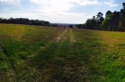 The pasture with a view