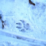 Spiele im Schnee: Welches Tier ist denn hier unterwegs gewesen? Foto (c) kinderoutdoor.de