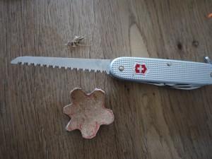 Jetzt sägen wir den Anhänger mit der Säge vom Taschenmesser aus. Foto (c) kinderoutdoor.de
