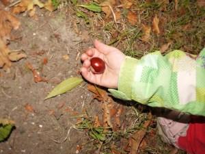 Basteln mit Kastanien: Erst sammeln, dann basteln.  Foto (c) kinderoutdoor.de