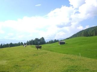 Abwechslungsreich ist Weg zur Berghütte mit den Kindern. Unterwegs stehen Kühe am Wegrand und sehen den kleinen Alpinisten zu. foto (c) kinderoutdoor.de