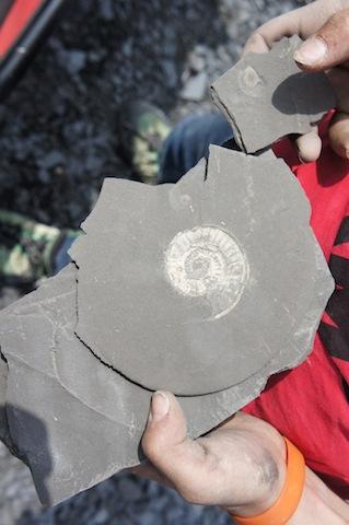 Fossilien Suchen Mit Kindern